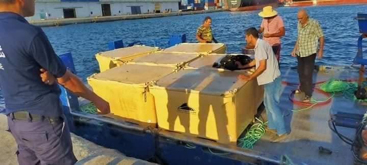 Photo of سوسة:الفرقة البحرية للديوانة تحبط عملية تهريب لأسماك التن بعرض سواحل سوسة